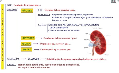 U 2 alimentaci n respiraci n y circulaci n complemento de la clase - Alimentos para la circulacion ...